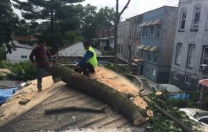 bonx tree removal