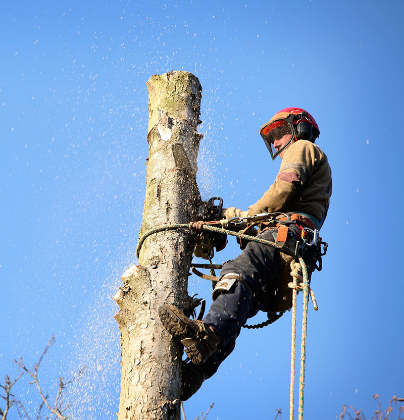 tree-trimming-service-in-bronx-ny