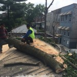 Bronx Tree Removal