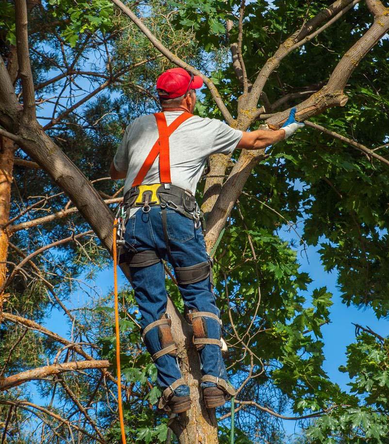 Bronx Tree Company cutting a log