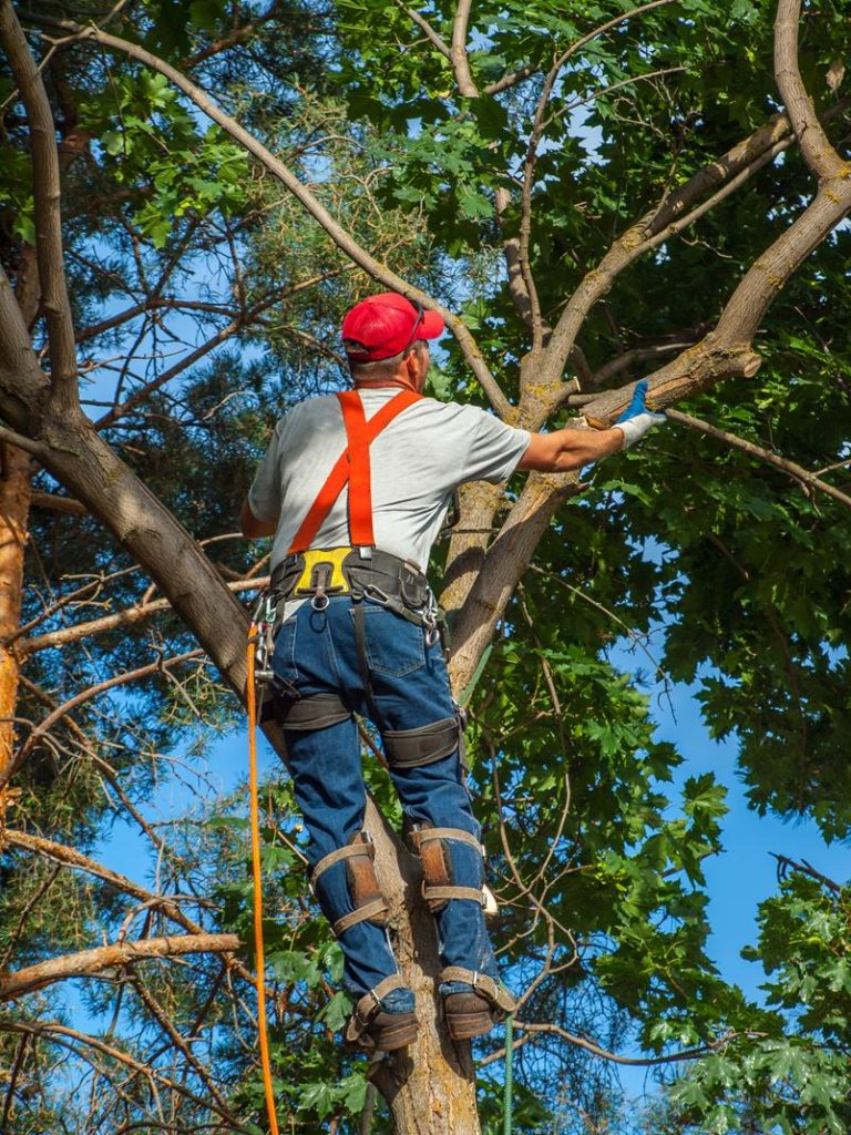 Bronx New York tree removal service near me