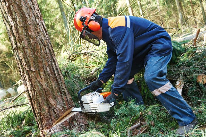 Bronx Tree removal services near me